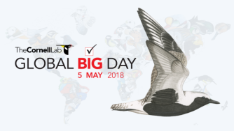 global-big-day-2018